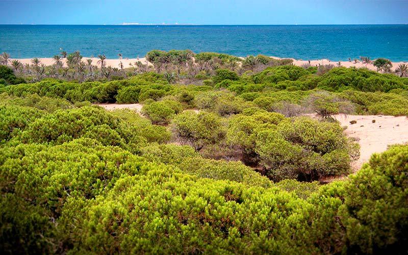 Ruta de senderismo por las dunas de Guardamar